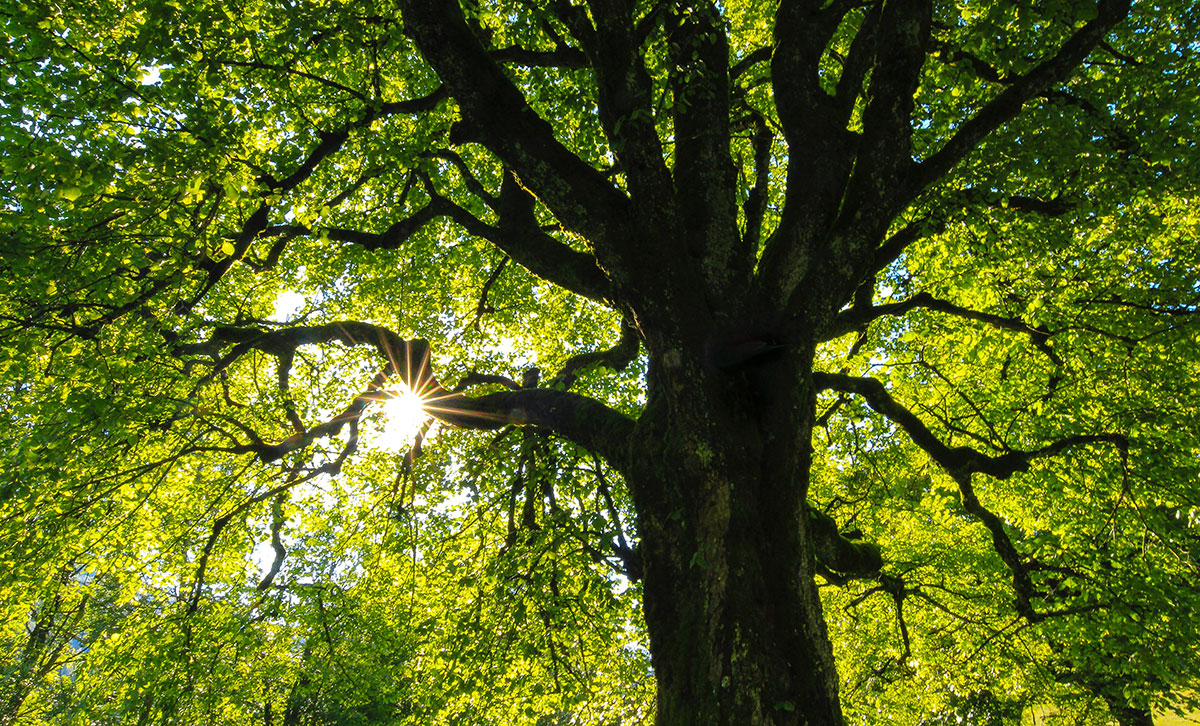 Just moved to the countryside?  Here's how to look after your trees